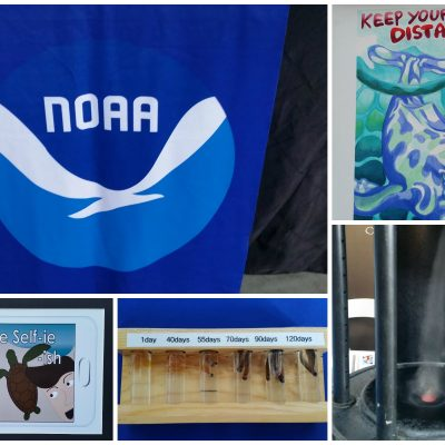 Aquarium of the Pacific hosts NOAA day