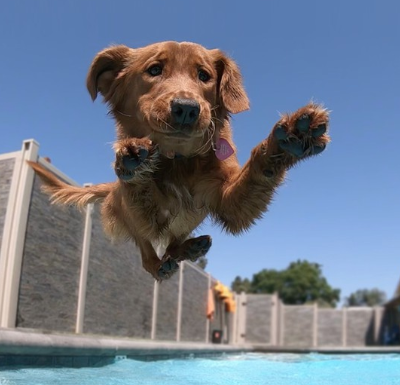 Treat your dog to the Bone Adventure's Swim Club