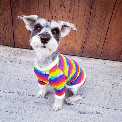 Woof's good: Ruff.de.Tails Rainbow Dog Shirt